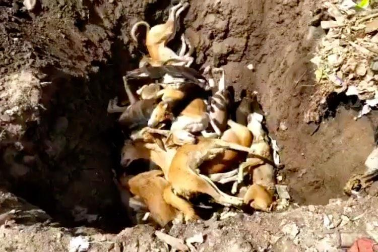 78 dogs allegedly killed by civic body found dumped in Telanganas Siddipet
