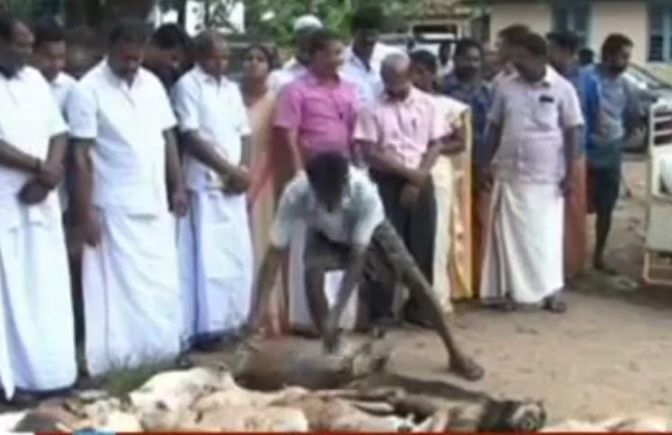 Civic body representatives in Kerala initiate stray dog culling