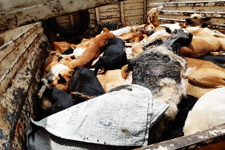 150 dogs poisoned some buried alive by GHMC Animal rights activists in Hyd allege