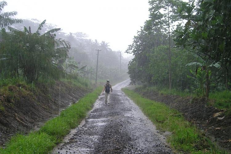 Person walking in the rain on a path through a banana field