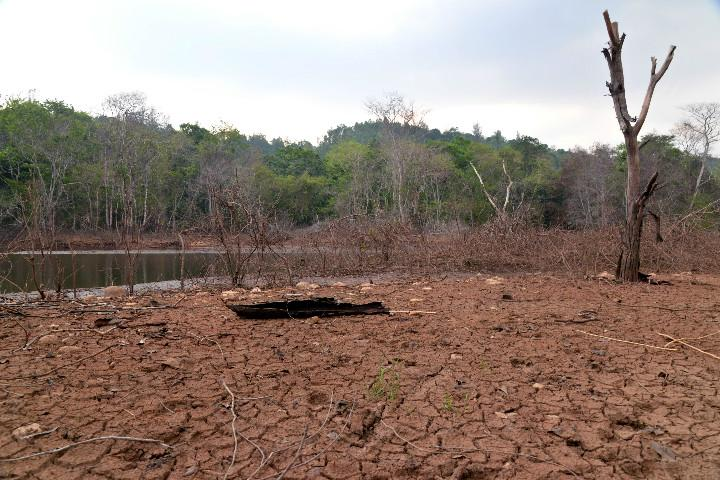 Palakkad scorches at 37C is Keralas paddy bounty at risk