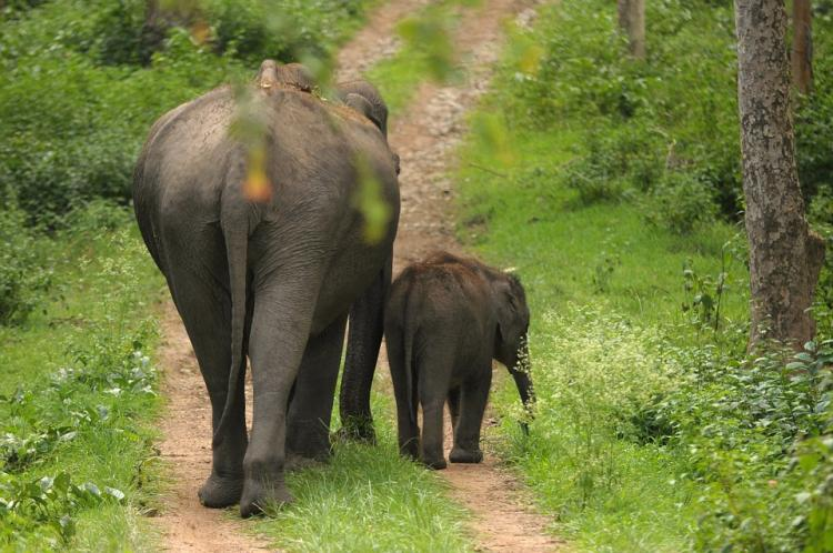 Wayanad Elephant Corridor project gets back on track govt to begin land acquisition soon