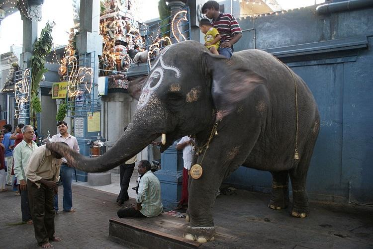 Use of elephants in temples for taking money exploitative amounts to begging Madras HC