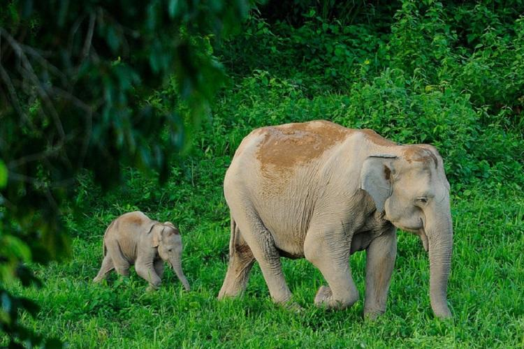 Ministry wants contraceptives for Karnataka elephants to control man-animal conflict