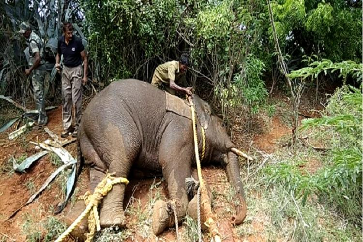 Man-animal conflicts claims 4 lives Wild elephant attacks Coimbatore village