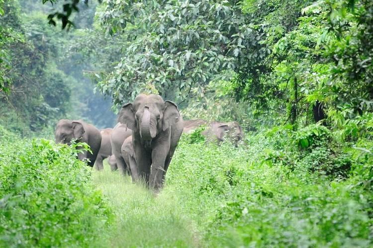 Three wild elephants move out of forest in Kerala officials struggle to send them back