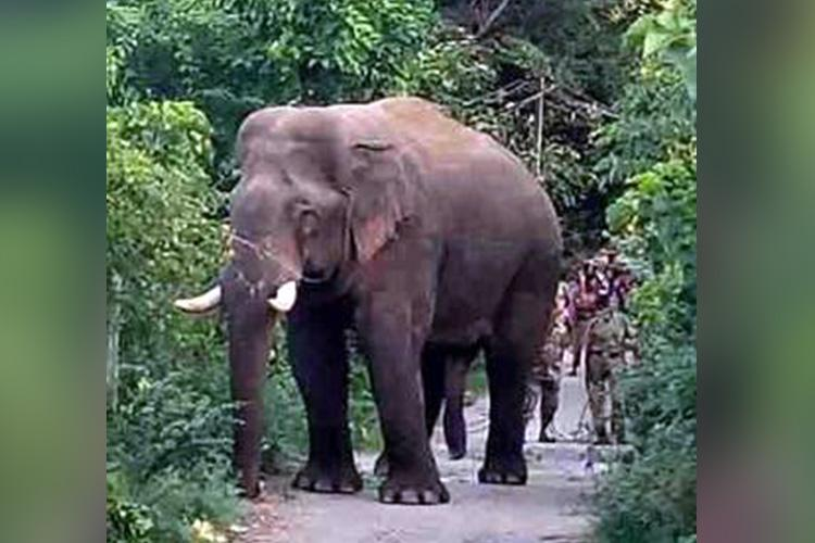 Why the battle over re-naming elephant Peelandi in Kerala is about tribal rights