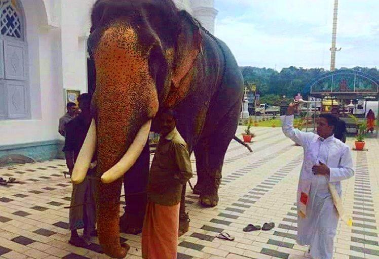 In a rarity elephant gets blessed in a Kerala church