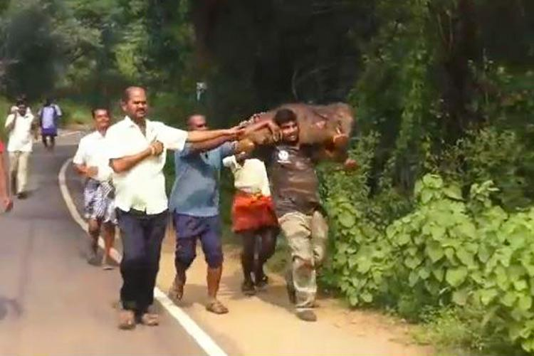 Video of officer carrying baby elephant back to its mother is winning the internet