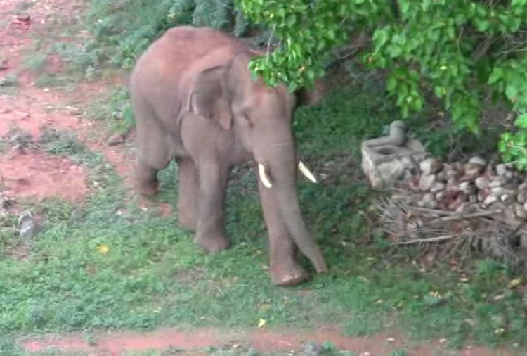 Coimbatore rogue elephant released into forest after it killed four including a 12-yr-old