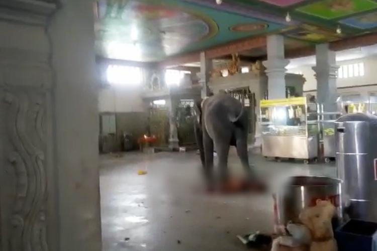 TN elephant who killed mahout to be kept out of temple activities for 3 months
