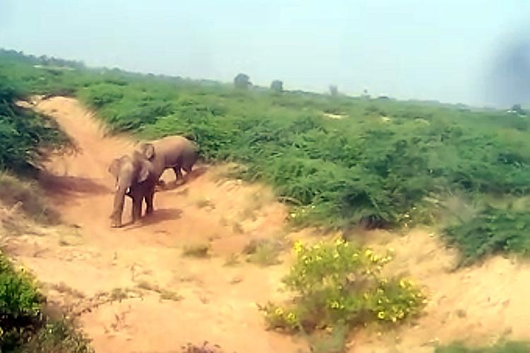 Residents of Chitradurga wary as elephants attack two more people