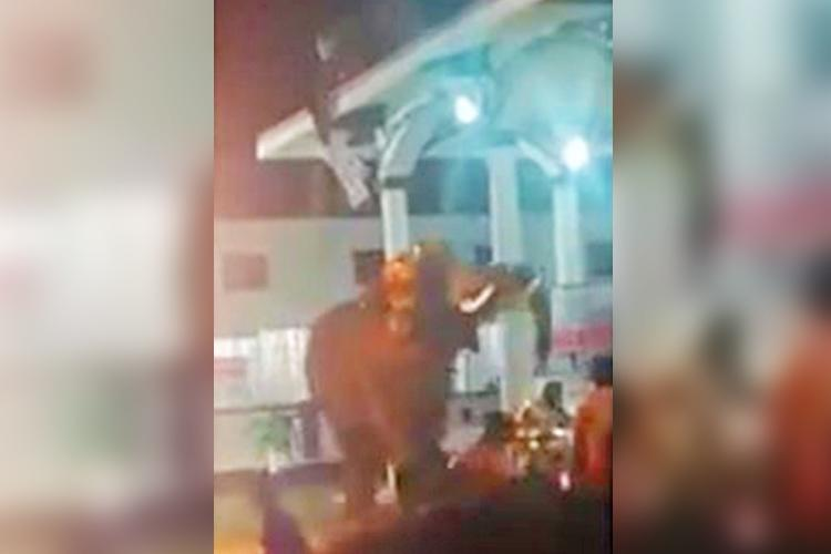Temple elephant runs amok in Kerala 15 injured in incident