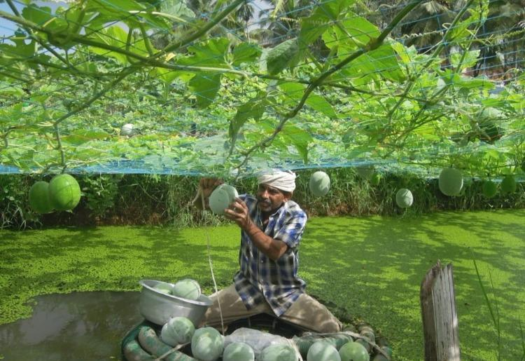 There's an organic farming revolution building in Kerala, and this