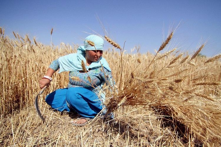 Battling centurys worst drought Indias farmers revive traditional grains