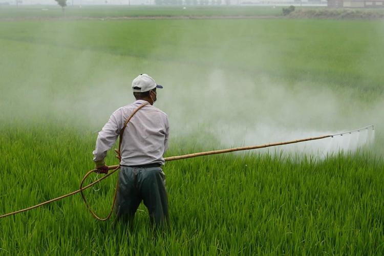 Representative image of a man in grey trousers and white shirt wearing a white cap spraying pesticide with a machine over a green field