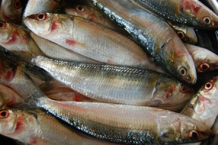 Hyderabads fish contain high level of arsenic and other heavy metals