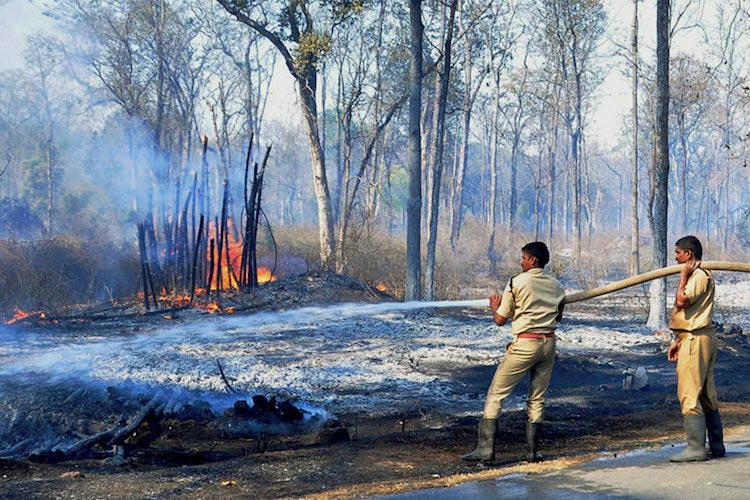 Four forest fires in 10 days destroy 700 acres of trees in Karnataka no one knows the cause