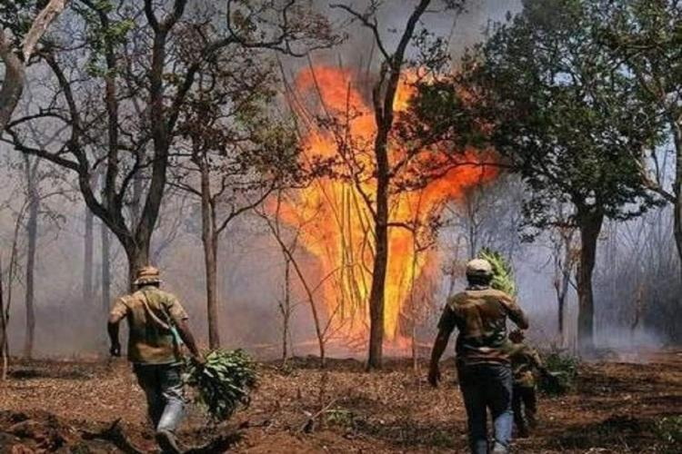 Understaffed and facing threats to life Keralas Forest Dept officials speak out