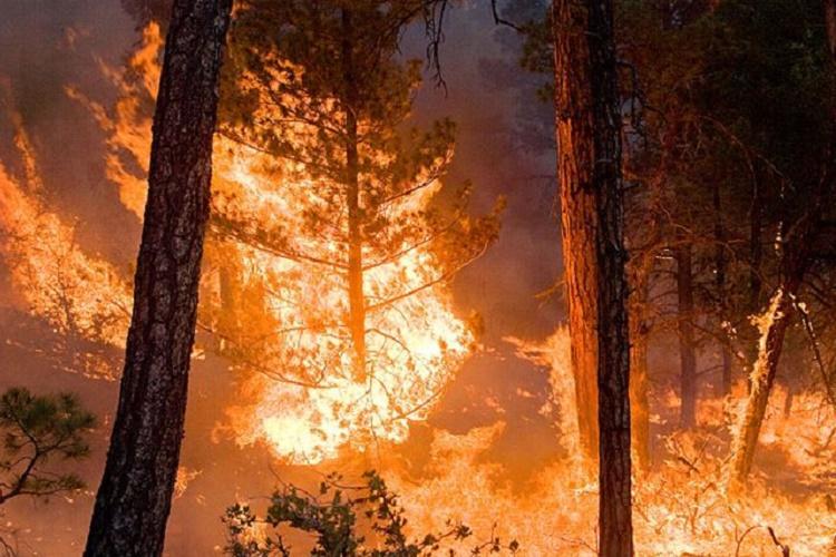 Forest fire erupts in Srirangapattana even as Bandipur blaze resurfaces