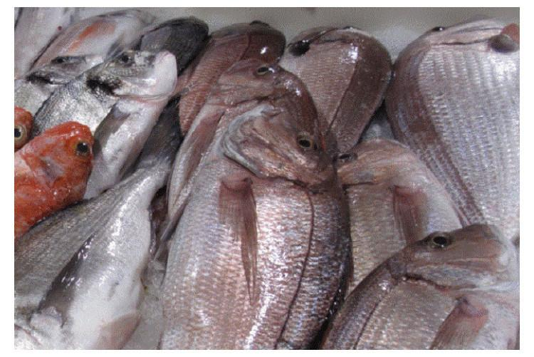 Formalin-laced fishes seized in Kerala What you should know about the substance