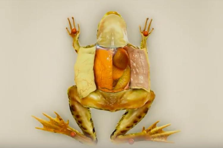 Indian Froggipedia becomes iPad App of Year Apple