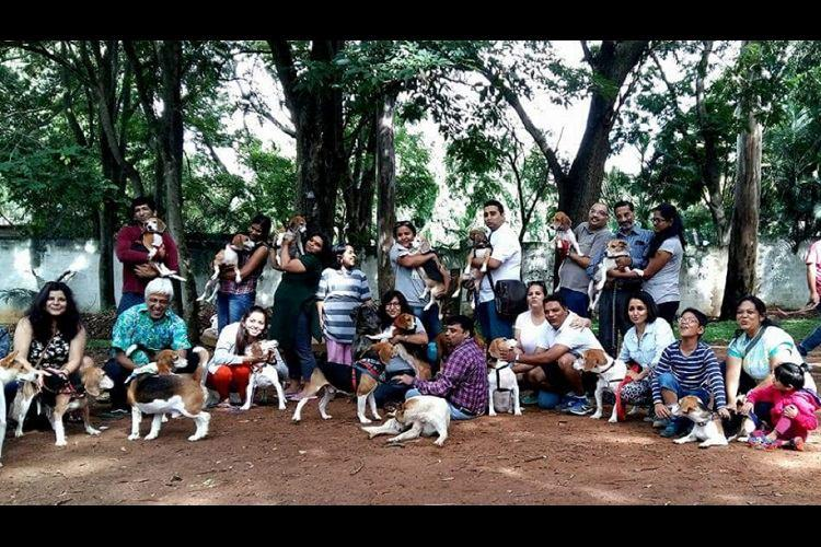 In pictures This Independence Day Bengalurus rescued beagles celebrate their freedom too