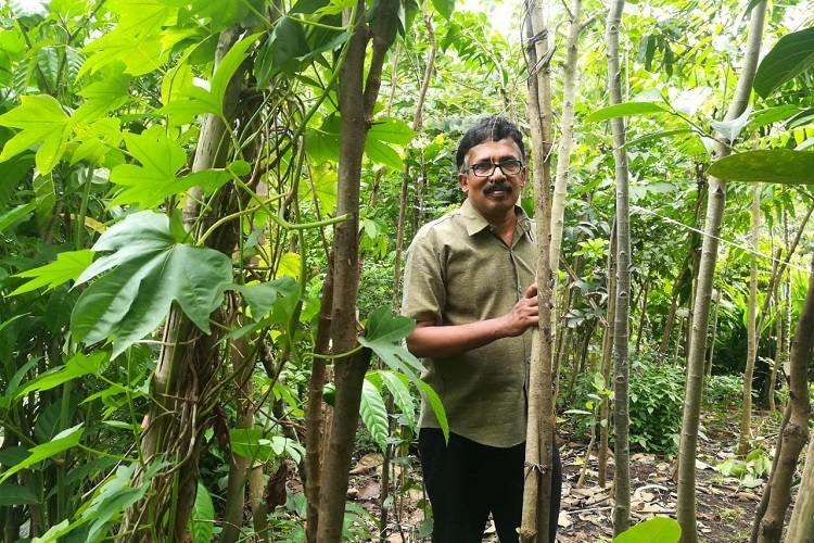 A mini forest of ones own How a Kerala man grew 400 trees in 3 cents of land