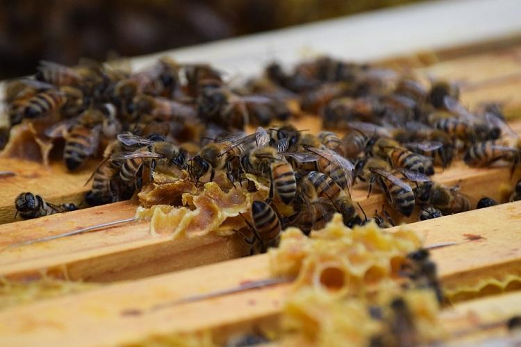 Karnataka minister stung by bee while inaugurating biodiversity park