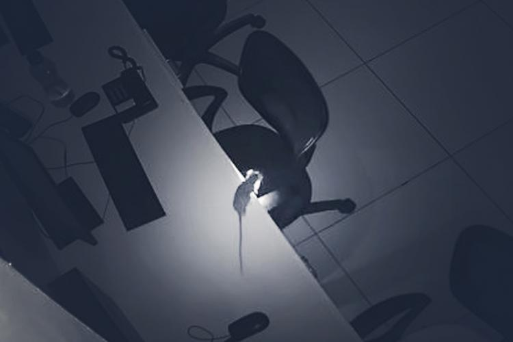 A CCTV camera still of a rat with a burning wick in its mouth on a table near a chair