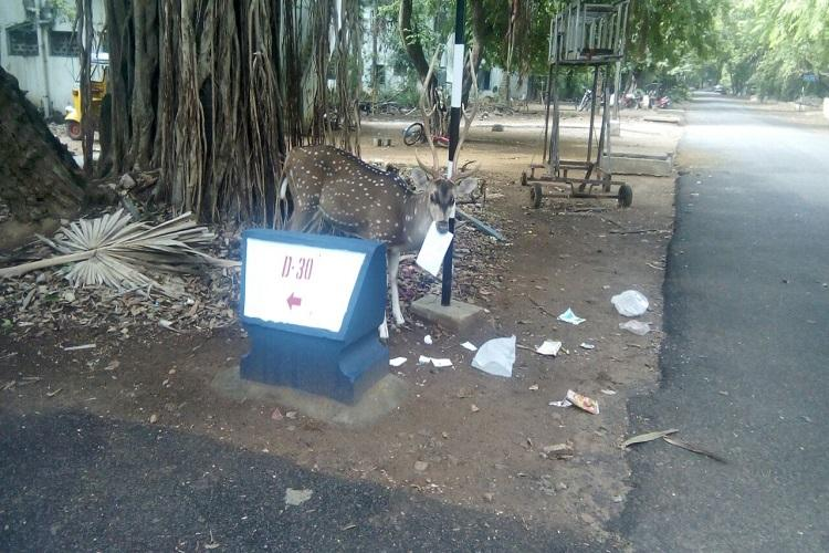 Despite warnings on animal deaths deer seen eating garbage in IIT Madras