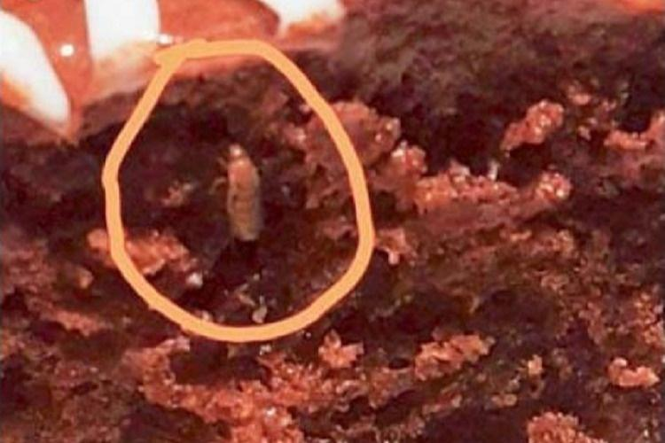 Insect found in Hyderabad IKEA food yes it happened again