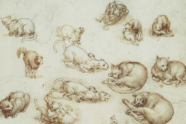 Why Leonardo da Vinci is the genius who would have aced the internet cat craze