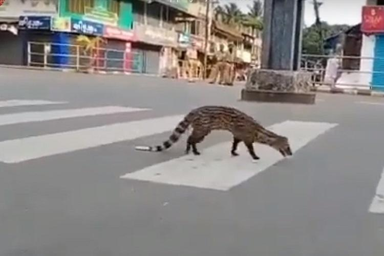Watch As humans stay in lockdown wild animals reclaim urban spaces