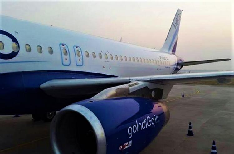Wild boar enters runway of Vizag airport gets hit by IndiGo flight
