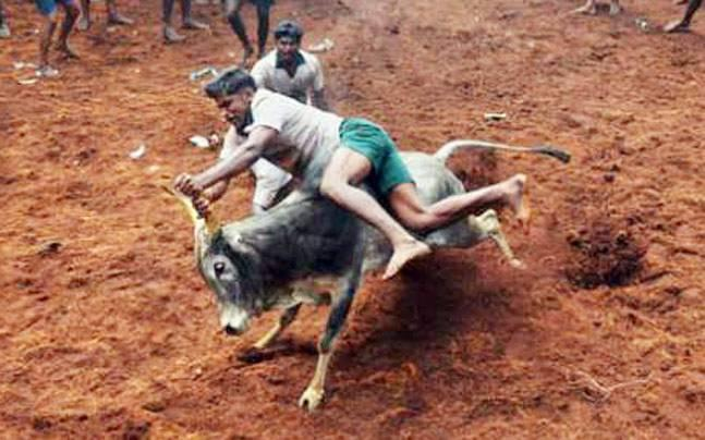 Seven people die during jallikattu in Tamil Nadu