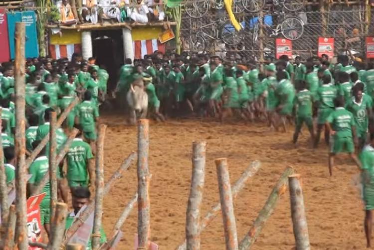 Jallikattu Barbaric animal abuse or Tamil culture Watch this short film