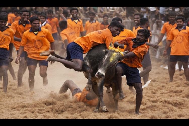 Jallikattu blame-game Centre and state point fingers at each other for ordinance
