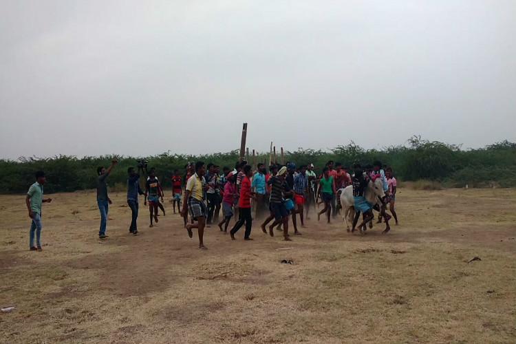 Season of defiance Jallikattu held in many places in Madurai despite SC ban