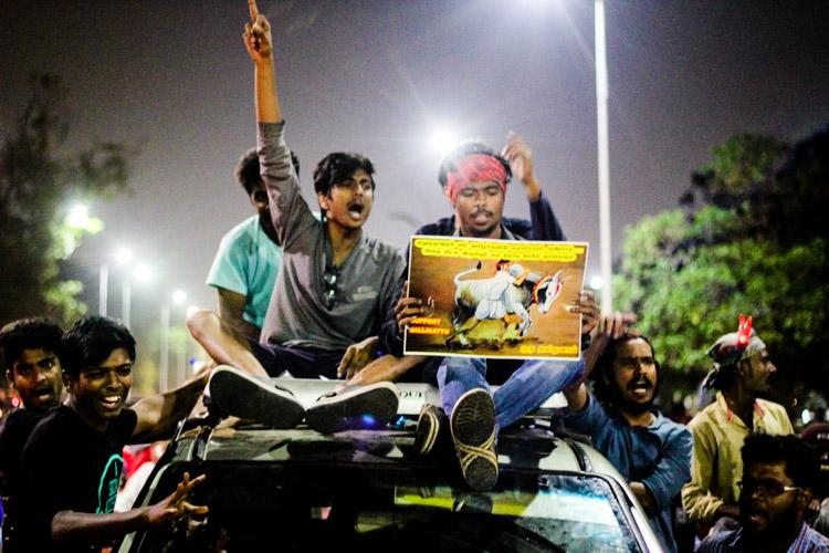 Agitation in the age of Google Parallels between jallikattu and anti-Hindi protests