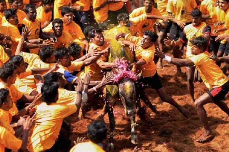Jallikattu Over 35 injured in bull-taming sport in Tamil Nadus Madurai