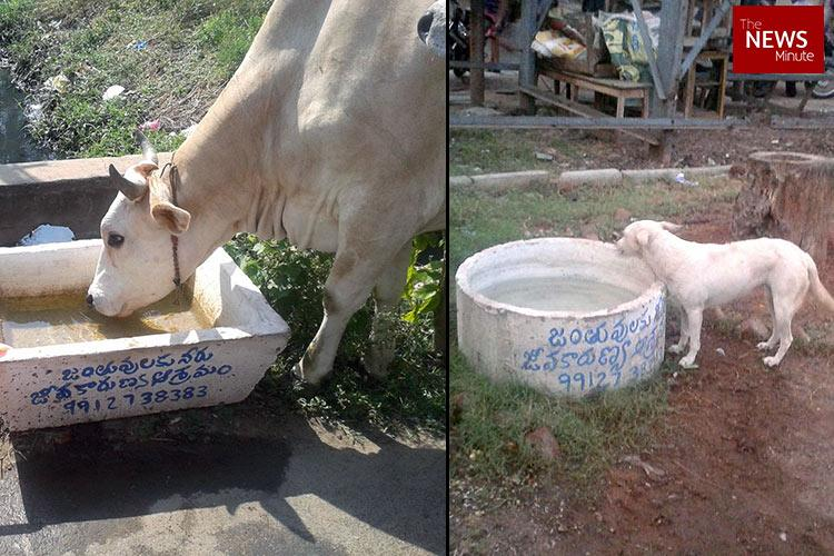 Caring for strays Vijayawada NGO installs water containers to beat the heat