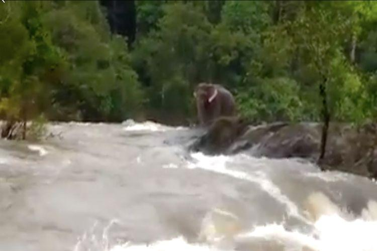 Jumbo rescue Kerala officials closed dam shutters to save an elephant