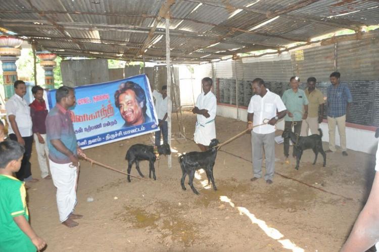 Rajini fans sacrifice goats to ward off evil spirits for the success of Kabali