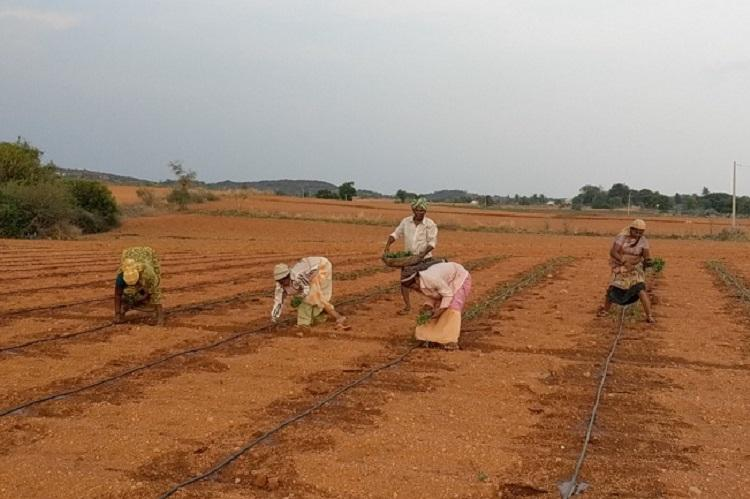 Failed borewells and farmer suicides The human cost of Anantapurs agrarian crisis