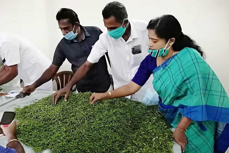 Kanamala village in Kerala has found hope in Kanthari Mulaku Birds eye chilli farming