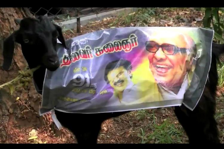 Karunanidhi is SO wrong about voters being goats What a goat did to him in 2007 ROFL