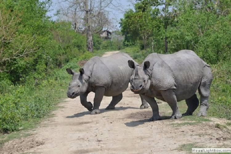 Why a documentary on Kaziranga has got the BBC banned from Indias tiger reserves