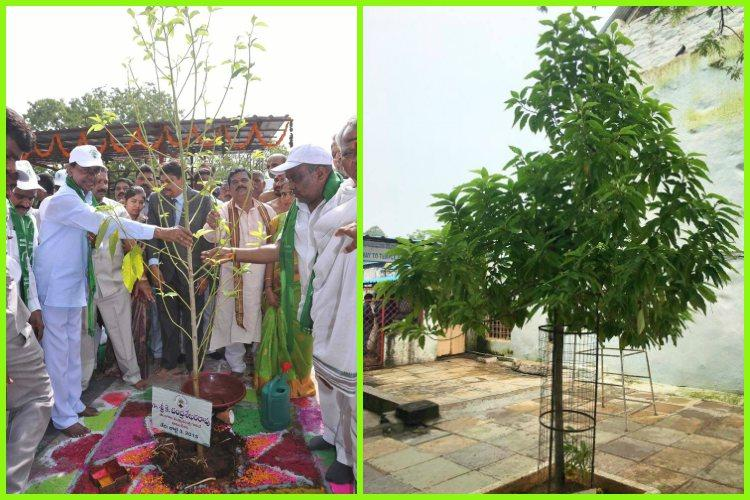 KCR proud that the sapling he had planted as part of Haritha Haram has become a tree