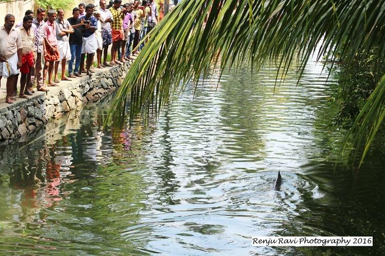 Dolphin spotted in Kochi canal causes stir amongst residents